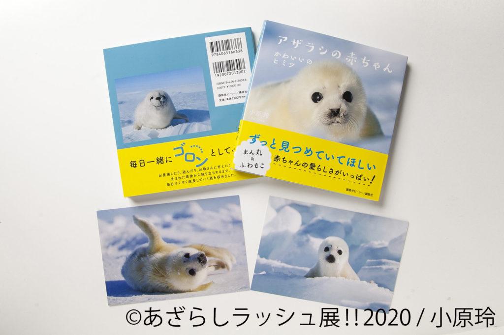 <小原玲> 会場限定でオリジナルポストカードがもらえる! ・写真集「あざらしの赤ちゃん」 1,300円