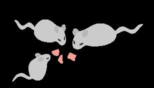 名古屋のネズミ駆除:ネズミ駆除方法