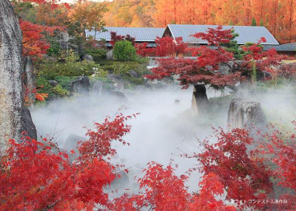 本格的な茶室、日本庭園で和を感じてみませんか。 お抹茶とお菓子もいただけます。気軽に体験してみてくださいね!