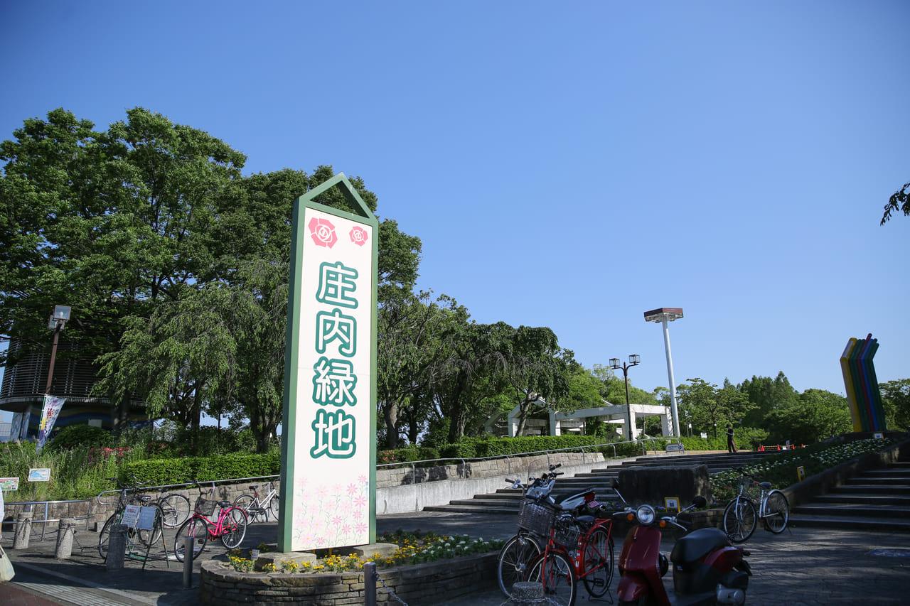 庄内緑地公園のコスモス畑(名古屋市西区)